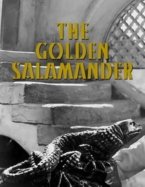 Golden Salamander