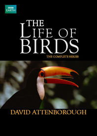 The Life of Birds Netflix UK (United Kingdom)