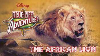 Netflix box art for The African Lion
