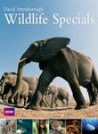 David Attenborough: Wildlife Specials Poster
