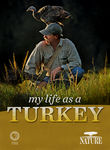 Nature: My Life as a Turkey Poster