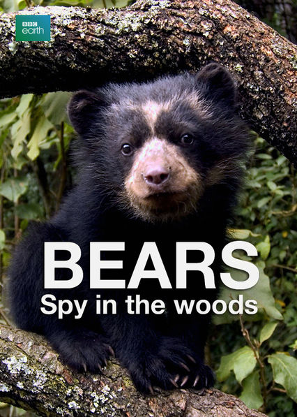 Bears: Spy in the Woods Netflix AR (Argentina)