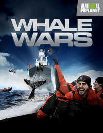 Whale Wars: Season 4: The Giant Enemy