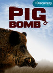 Pig Bomb Poster