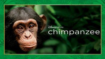 Netflix box art for Chimpanzee