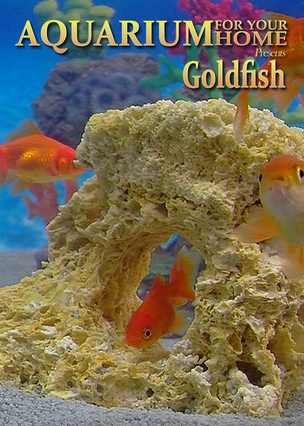 Aquarium for Your Home: Goldfish