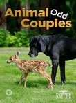Nature: Animal Odd Couples Poster