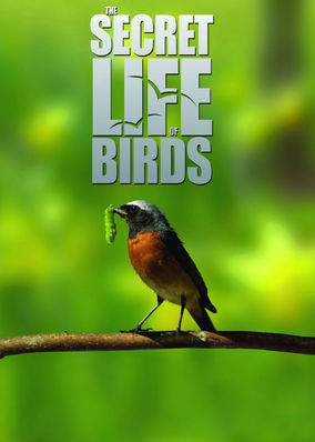Secret Life of Birds, The - Season 1