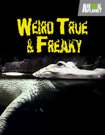Weird, True & Freaky: Season 3: Eternally Stuffed